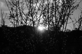 last of the light