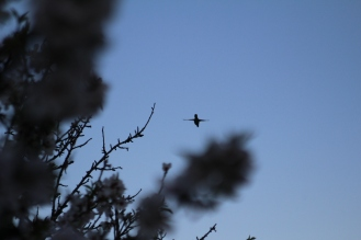 with humming birds.