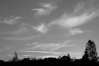 in the evening sun