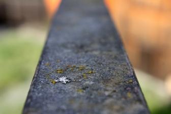 just a little lichen